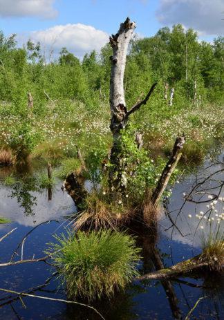 Wunstorfer Moor