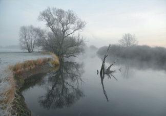 Leine im Nebel